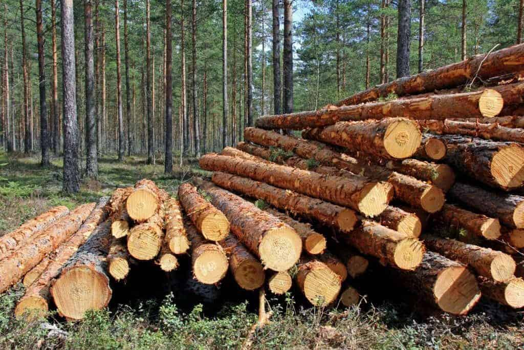 Where Do you Buy Logs for Building a Log Cabin? - Outdoor ...