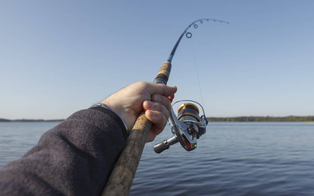 The Ultimate Beginner's Guide to Fishing for the Total Beginner