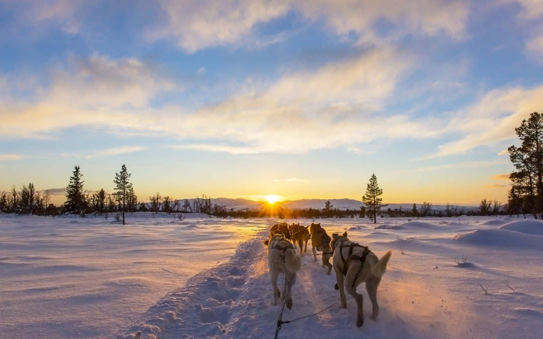 """""""Mush"""" In Dog Sledding: What it Means, and Where it Came From"""