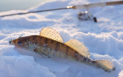 21 Walleye Ice Fishing Tips to Help You Catch More