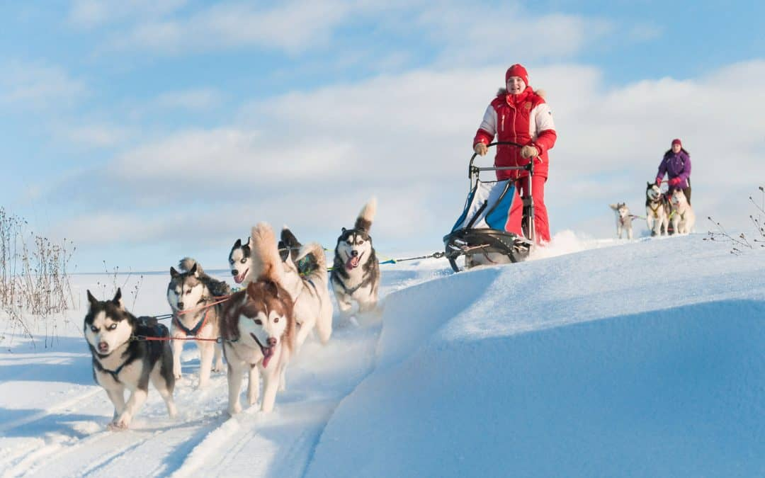 Dog Sledding History (When and Where it Started)